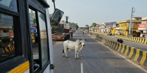 Ranakpur21