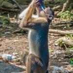 Elephanta Island Monkey Mumbai