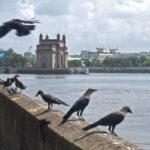 Gateway of India 02 Mumbai