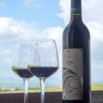 Nasik Vineyards 2