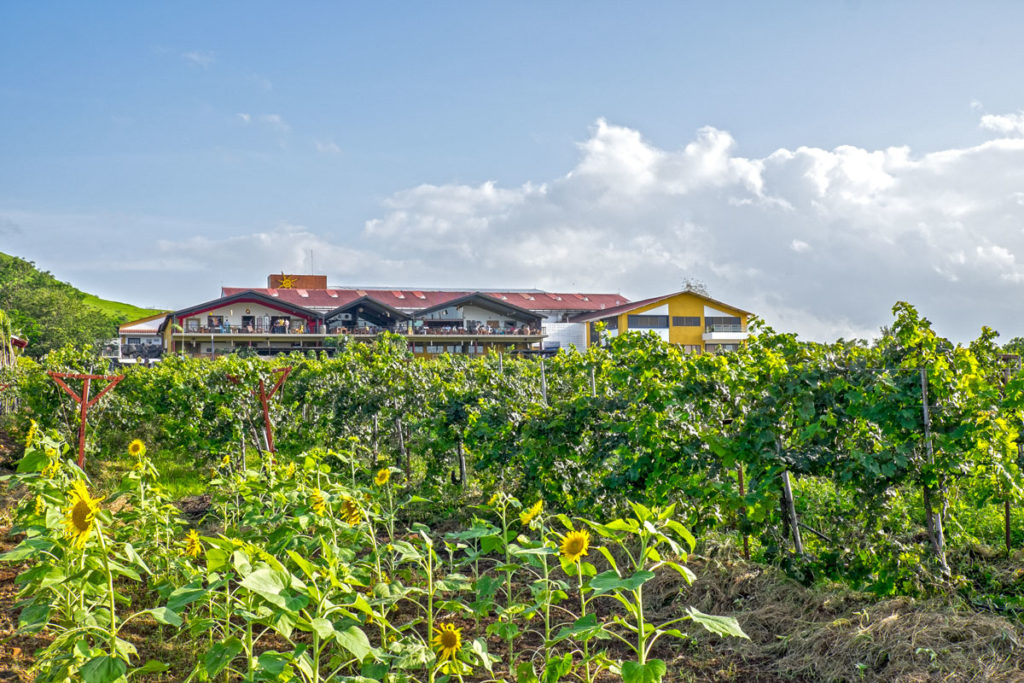 Nasik Vineyards 8