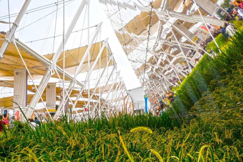 Expo Milano 2015 n04