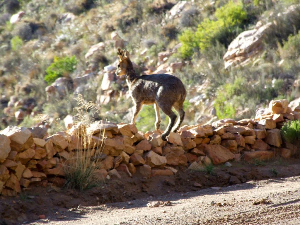 Karoo - Prince Albert