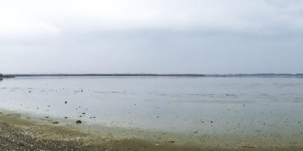 Lago salato di Larnaca 01