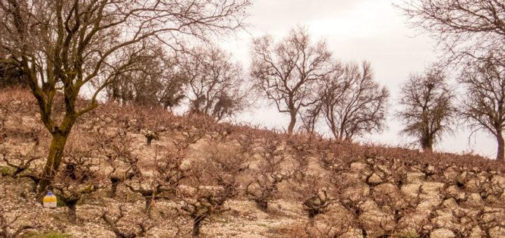 Paphos-Wine-(copertina)
