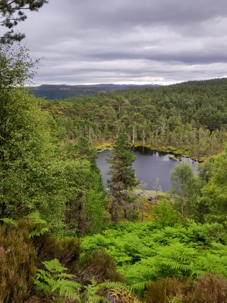 Loch Innis Gheamhraidh - Beauly
